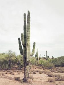 Desert Cactus by Sisi and Seb