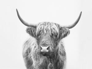 Highland Bull by Sisi and Seb
