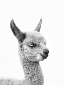 Little Alpaca by Sisi and Seb