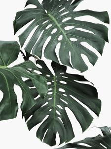 Monstera Jungle by Sisi and Seb