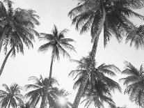 Palm Leaf-Sisi and Seb-Art Print