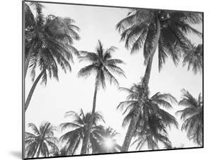 Tropical Black and White by Sisi and Seb
