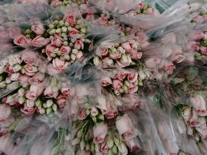 Bundles of Pink Roses are Gathered for Sale by Sisse Brimberg