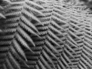 Fern Fronds Create Patterns by Sisse Brimberg
