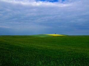 Fields and Sky by Sisse Brimberg