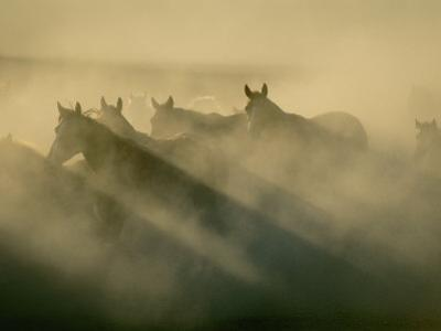 Horses Run Home by Sisse Brimberg