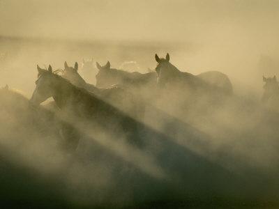 Horses Run Home