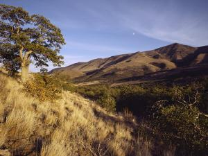 Scenic View of the Yakima Valley Landscape by Sisse Brimberg