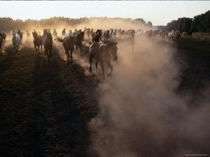 The Horses Run Home Through a Cloud of Dust by Sisse Brimberg