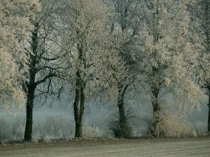 Tree Branches Have a Coating of Frost by Sisse Brimberg