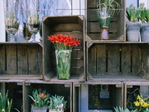 Tulips in Vases Atop Makeshift Wooden Crates by Sisse Brimberg