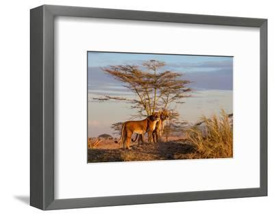 Sisters-Alessandro Catta-Framed Photographic Print