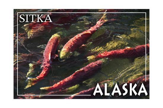 Sitka, Alaska - Salmon-Lantern Press-Art Print