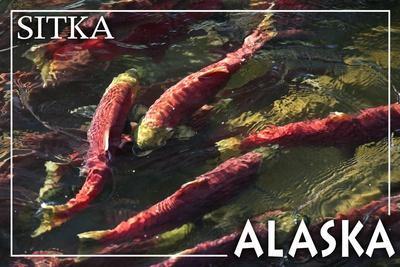 https://imgc.artprintimages.com/img/print/sitka-alaska-salmon_u-l-q1gqhxz0.jpg?p=0