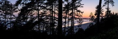 Sitka Spruce trees on Long Beach at sunset, Vancouver Island--Photographic Print