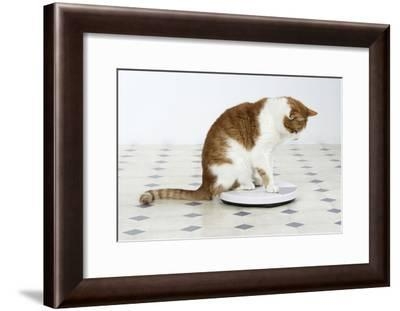 Sitting on Bathroom Scales--Framed Photographic Print