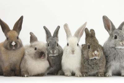 Six Baby Rabbits in Line-Mark Taylor-Photographic Print