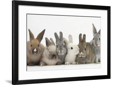 Six Baby Rabbits-Mark Taylor-Framed Photographic Print