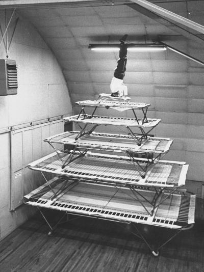 Six Sizes of Trampolines Manufactured by Nissen Trampoline Co--Photographic Print
