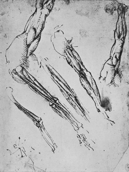 'Six Studies of an Arm Showing in Three Cases the Bones', c1480 (1945)-Leonardo da Vinci-Giclee Print