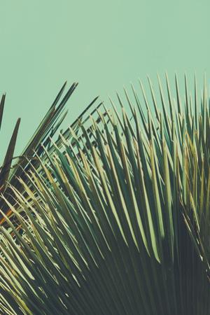 Abstrac Tropical Vintage Background. Retro Toned. by sk901