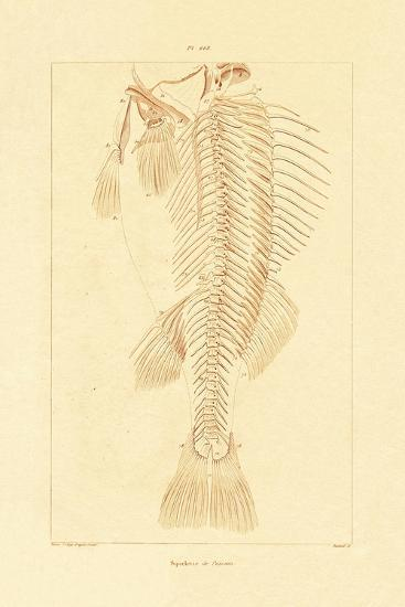 Skeleton, 1833-39--Giclee Print