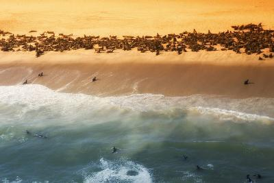 Skeleton Coast, Namibia. Abstract View of a Colony of Cape Fur Seals-Janet Muir-Photographic Print