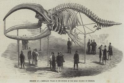 Skeleton of a Greenland Whale in the Museum of the Royal College of Surgeons--Giclee Print