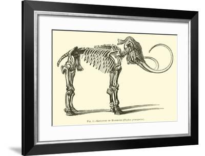 Skeleton of Mammoth, Elephas Primigenius--Framed Giclee Print