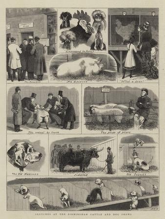 Sketches at the Birmingham Cattle and Dog Shows-John Charles Dollman-Giclee Print
