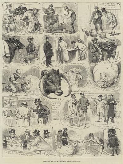 Sketches at the Birmingham Fat Cattle Show-Alfred Courbould-Giclee Print