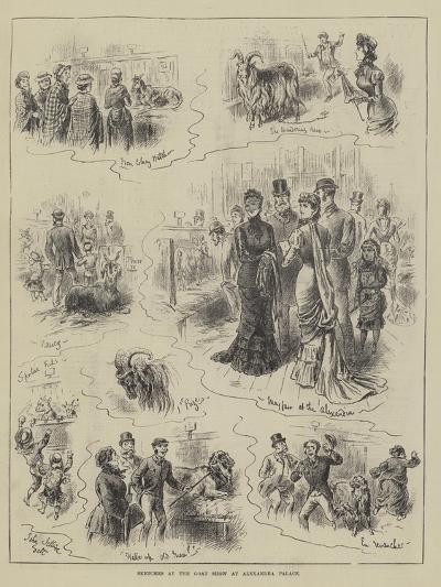 Sketches at the Goat Show at Alexandra Palace-John Jellicoe-Giclee Print