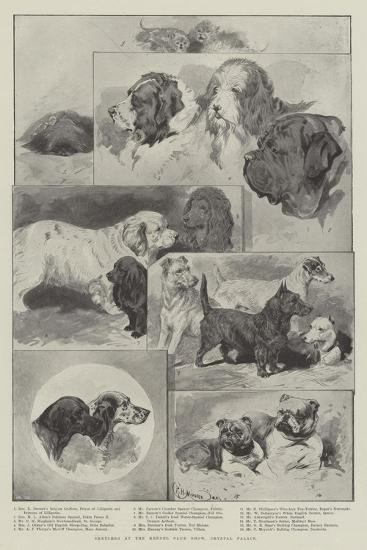 Sketches at the Kennel Club Show, Crystal Palace--Giclee Print