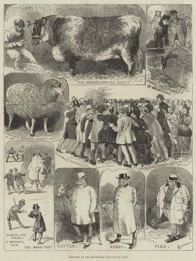 Sketches at the Smithfield Club Cattle Show-Alfred Courbould-Giclee Print