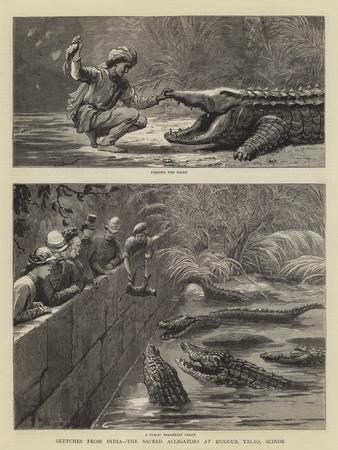 Sketches from India, the Sacred Alligators at Muggur Talao, Scinde--Giclee Print