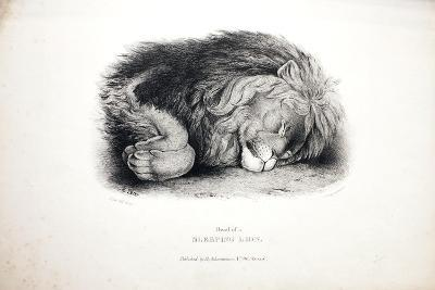 Sketches of Animals at the Zoological Gardens-Edward Lear-Giclee Print