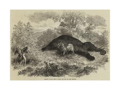 Sketches of South African Travel, the Lion and Dead Elephant--Giclee Print