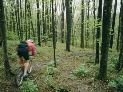 A Bicyclist Rides Through the Woods