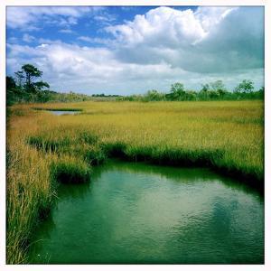 A Chesapeake Bay Marsh by Skip Brown