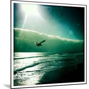 A Crow Glides over the Pacific Ocean by Skip Brown