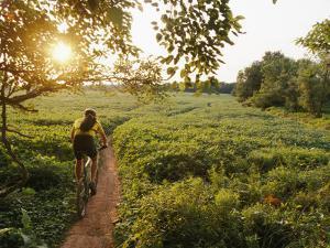 A Cyclist Rides on a Trail Through a Soybean Field by Skip Brown