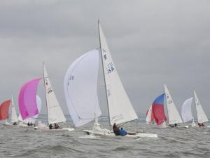 Etchells Sailboats Race Downwind in a Regatta on the Chesapeake Bay by Skip Brown