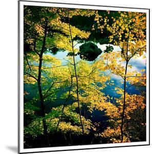 Fall Foliage Near the C&O Canal, Potomac, Maryland by Skip Brown