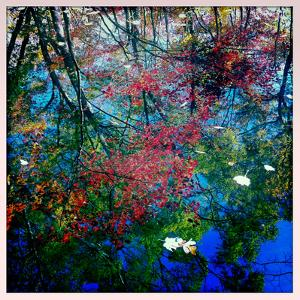 Fall Leaves Reflected in a Pond by Skip Brown