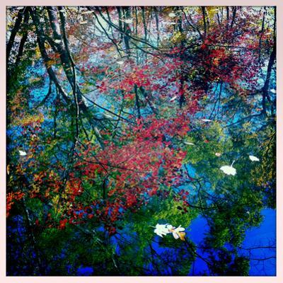 Fall Leaves Reflected in a Pond