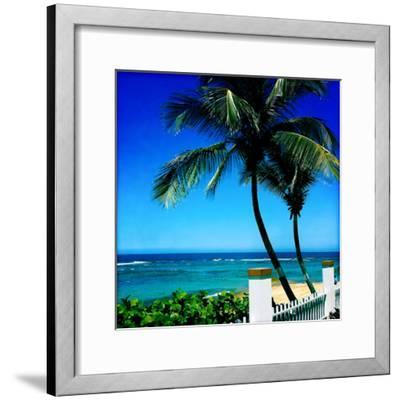 Palm Trees and a Fence at Shacks Beach Near Aquadilla, Puerto Rico