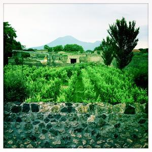Roman Walls and Vineyards in Pompeii and Mount Vesuvius in the Background by Skip Brown