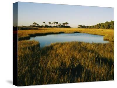 Salt Marsh, Assateague Island, Virginia