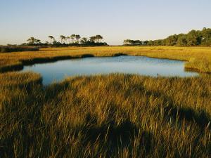 Salt Marsh, Assateague Island, Virginia by Skip Brown