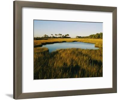 Salt Marsh, Assateague Island, Virginia